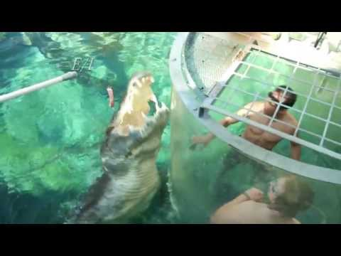 Awesome Adventures Australia: Crocosaurus Cove
