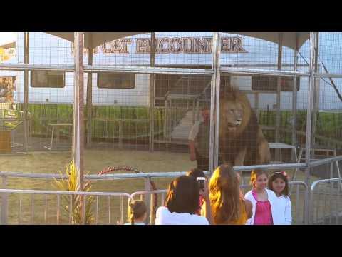 Meadowlands State Fair lion Show