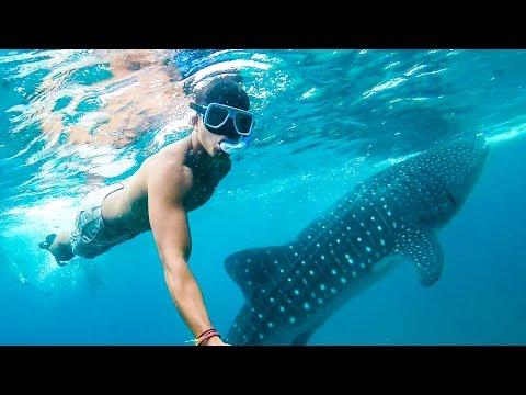 142 | OSLOB WHALESHARKS & MOALBOAL BAITBALLS!!!! (Southeast Asia Travel VLOG)