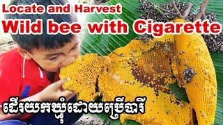 ដើរយកឃ្មុំដោយប្រើបារី Catch and eat : Locate and harvest wild bees with cigarette