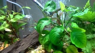 tropical fish tank aqua one ar 620 planted tank
