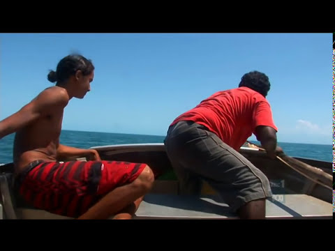 Turtle Hunting- Look Out