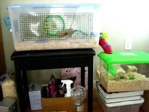 Chinese Hamster Cage Tour