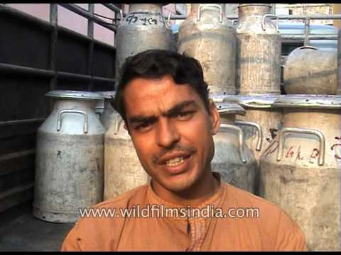 Dairy Vikas Yojna aims to provide loans for better dairy ventures in India
