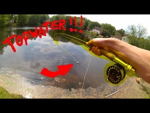 Fly Fishing For Pond Bluegill X EXPLOSIVE BLOWUPS!