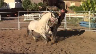 When Horses Attack Part 1, Mike Hughes, Auburn California