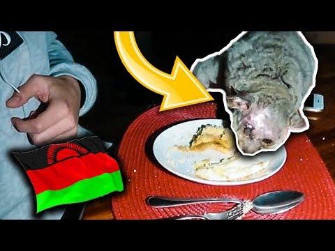 MALAWI #3 - ASSURDO! UN ANIMALE SELVATICO MANGIA DAL MIO PIATTO! Anima e Lasabri (PARTE 2)