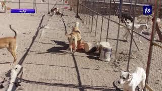 وفاة طفل مصري نهشته كلاب ضالة في المفرق - (5-4-2019)