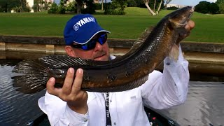 Top Water Bullseye Snakehead Fishing Class 201 Florida with Captain Shane
