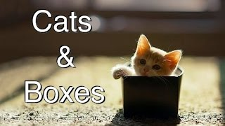 Funny Videos 2014  compilation of Cats and Boxes