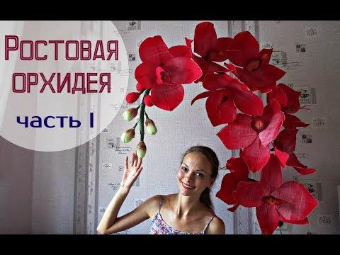 Большие цветы   Ростовые орхидеи. Часть 1