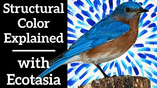 Structural Color Explained - with Backyard Expeditions