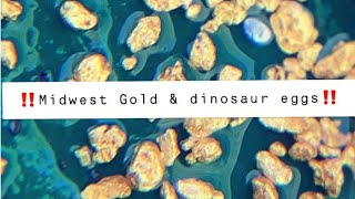 MUST WATCH!!! CRAZY GOLD CLEANUP!!! AND DINOSAUR EGGS!?!?!