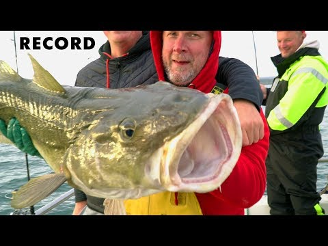 Catch Of Cod 10 And 20 Kilos. Sea Fishing In Norway