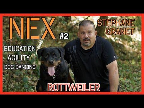 ROTTWEILER DOG DANCING EDUCATION # 2