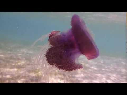 Jellyfish @ Red sea