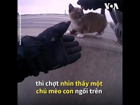 Mỹ: Cảnh sát cứu mèo con lạc lõng giữa xa lộ  (VOA)