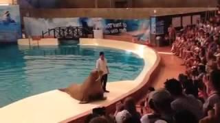 Тюлень танцует как Майкл Джексон