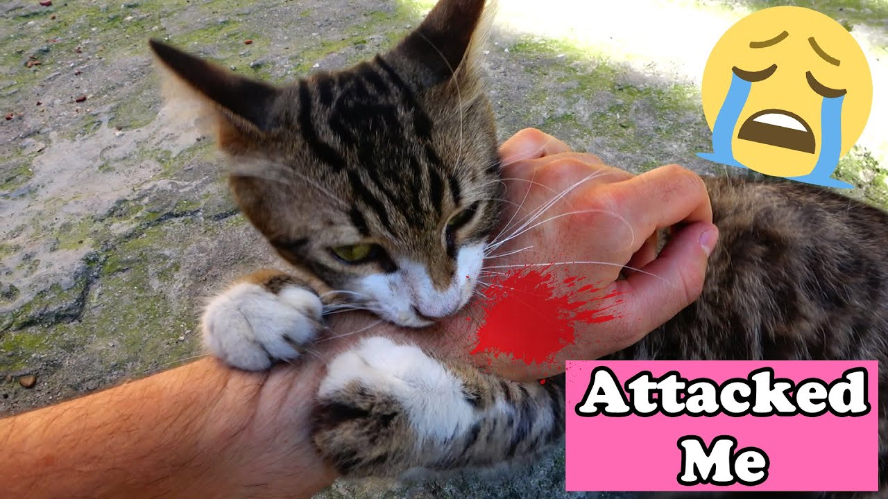 No Feral Kittens , They Are Just Homeless | Adorable Cats