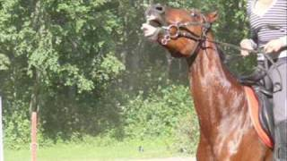 Ein Pferd erzählt...