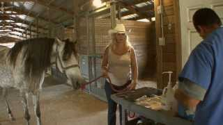 Repeat youtube video How To Artificially Inseminate A Horse