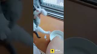 Funny cats video 😋😋