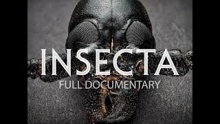 Video Insecta: Science That Stings download MP3, 3GP, MP4, WEBM, AVI, FLV April 2018