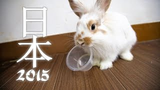 Japan 2015 Part 2 - Tokyo, Mt Takao, Yokohama, Enoshima