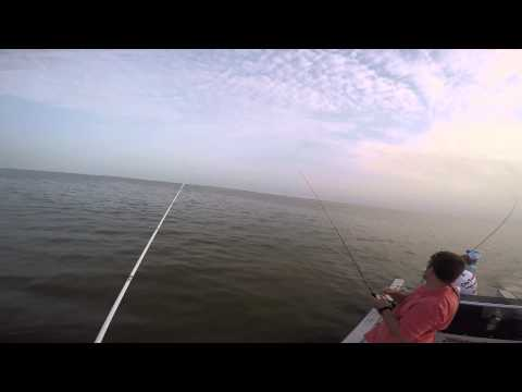 East Bay fishing early summer 2015 with Capt. James Plaag