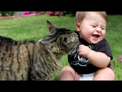Baby Cat Cute Live Wallpaper Sjove Katte Irriterende Babyer S 248 D Kat Youtube