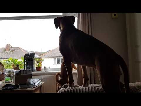 NEW Website! NEW Forums! PRIZES!! Boxer Dog Lovers