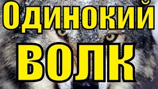 ПЕСНЯ - ОДИНОКИЙ ВОЛК / Блатной Удар - Одинокий волк / Лучший Хит Шансона / Лучшая песня про волка