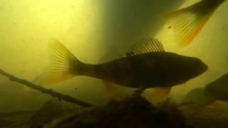 Рыбалка на пруду Попал на нерест карася Подводные съёмки