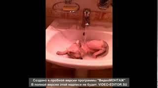 КОТЕНКА СФИНКСА ЗАБЫЛИ В РАКОВИНЕ!!!)))))