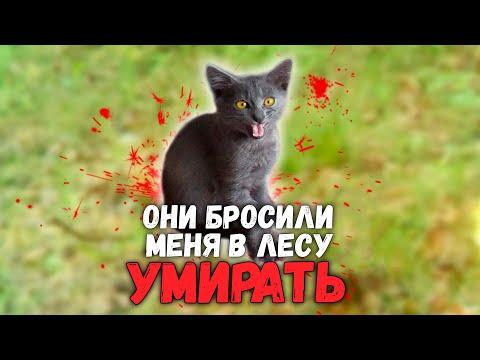 Спасение котенка из