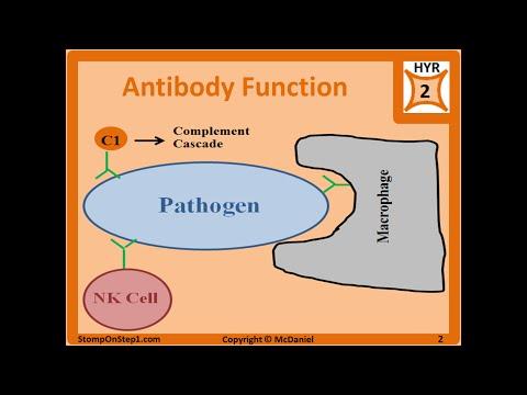 Antibody Structure & Formation IgG IgA IgE Autoantibodies ANA p-anca Isotype
