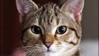 ねこかわいい(´∀`艸)♡ 癒される~ 続きは動画をご覧下さい! https://yo...