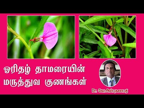 ஓரிதழ் தாமரையின் மருத்துவ குணங்கள் | Health Benefits of Oridazh Thamarai