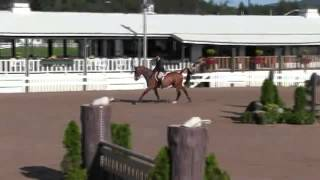 Video of BORN TO BE ridden by JACQUELINE SHILEN from ShowNet!