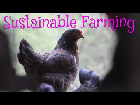 Learn how to become an organic farmer - Sustainable Farming at Fickle Creek Farm North Carolina