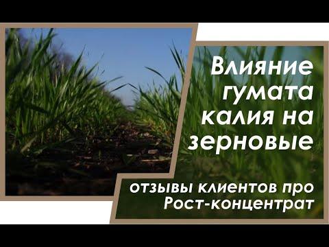 pyavits-na-zernovih-kolosovih-foto
