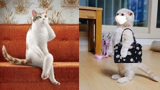 Try Not To Laugh or Grin While Watching Funny Animals Compilation #42