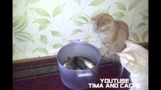 Кот Тима и Кеша - Коты против Рыбы / funny cats