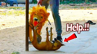 Fake Tiger Moving Prank Real Dog - Must Watch Funny Video Prank Try Not To Laugh