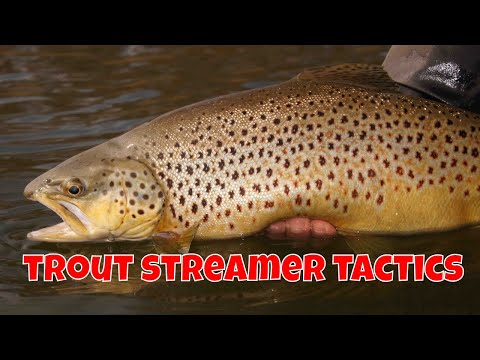Trout Streamer Tactics   Ontario