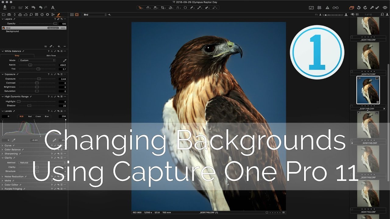 How do I change the background color in Capture One?