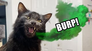 If Cats Burped Instead of Meowed