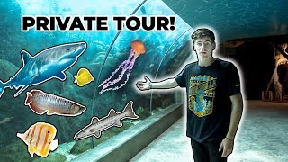 monster-fish-aquarium-tour