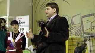 4 декабря выставка Кошки Петербурга