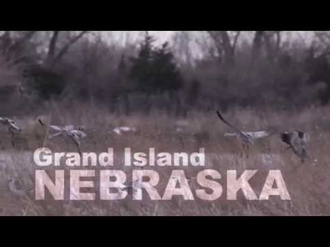 Strong Roots Nebraska